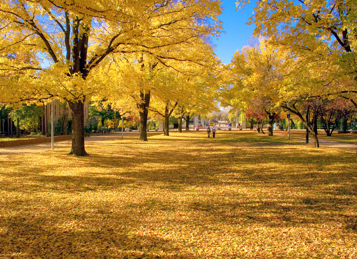 ACT_University-Avenue_ANU_Autumn.jpg