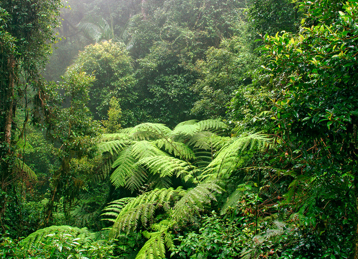 NSW_Border-Ranges-National-Park.jpg