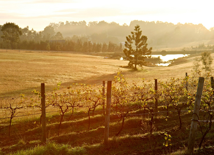 NSW_Vineyard-at-Dawn_Hunter-Valley.jpg