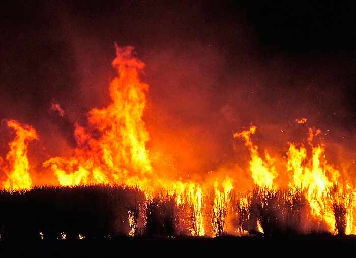 QLD_Burning-the-cane-before-harvest.jpg